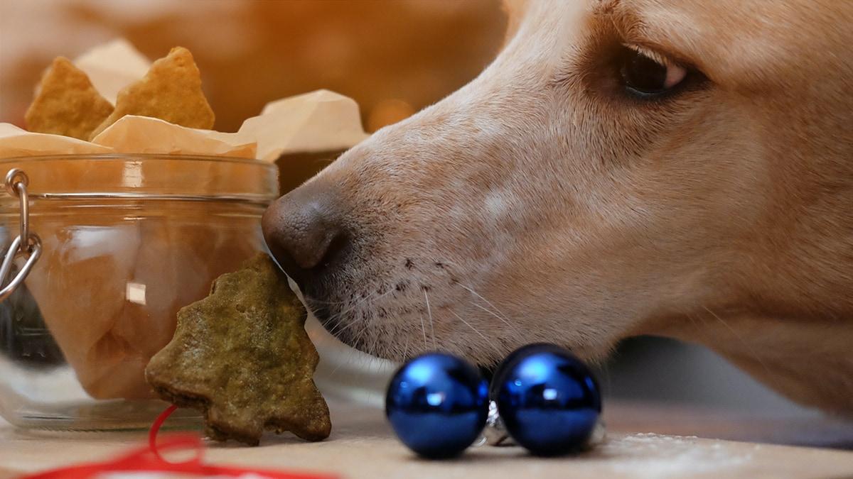 Rezept: Leberwurst-Tannenbäume für deinen Hund