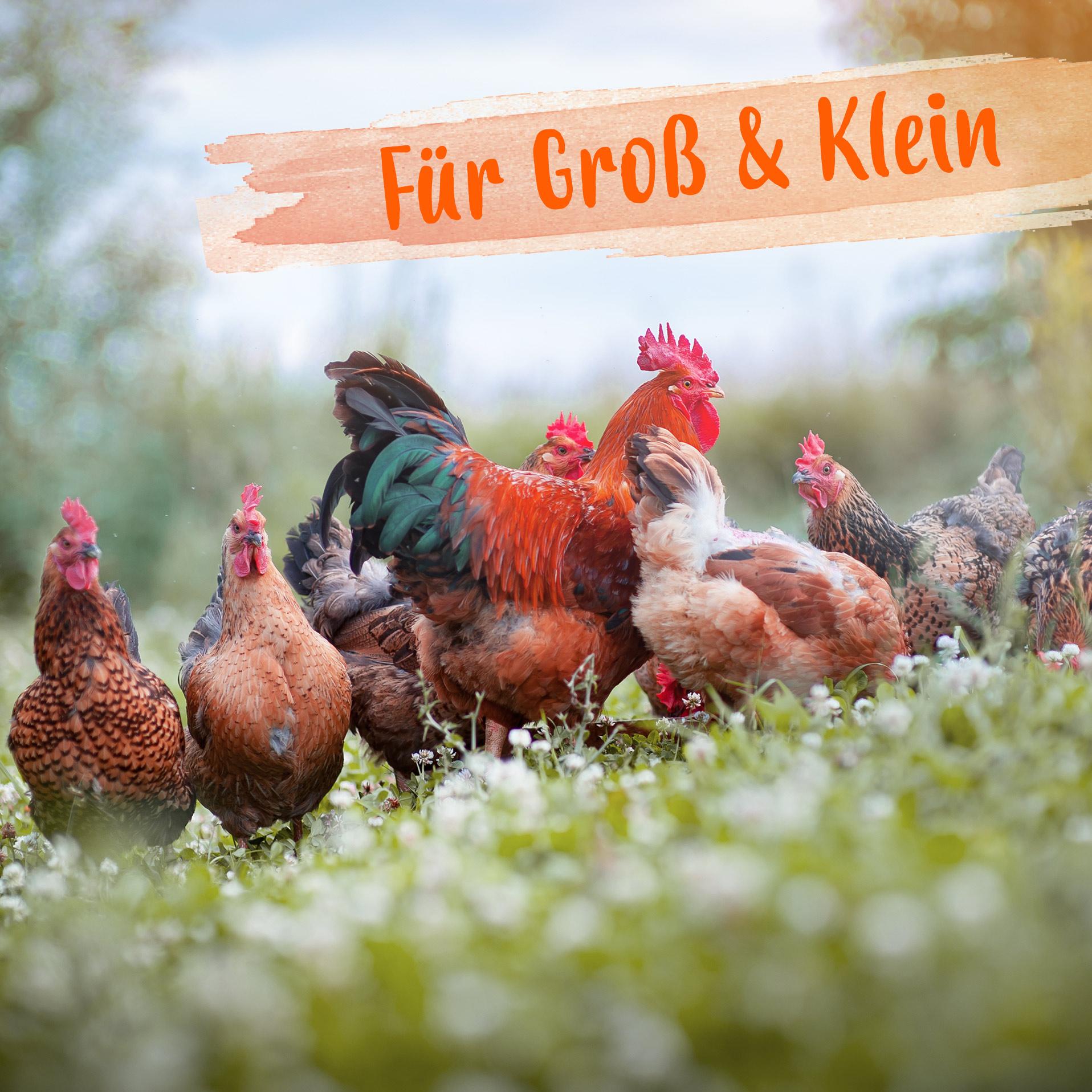 Futterkalk mit Kalzium für Hühner - Premium Futterkalk für Hühner - 1 Kg