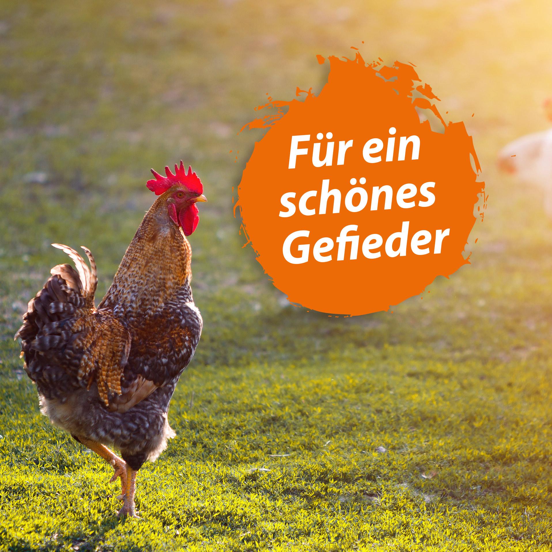 Geflügel Bierhefe Spezial - Futterergänzung für Hühner & anderes Geflügel - 1,5 Kg
