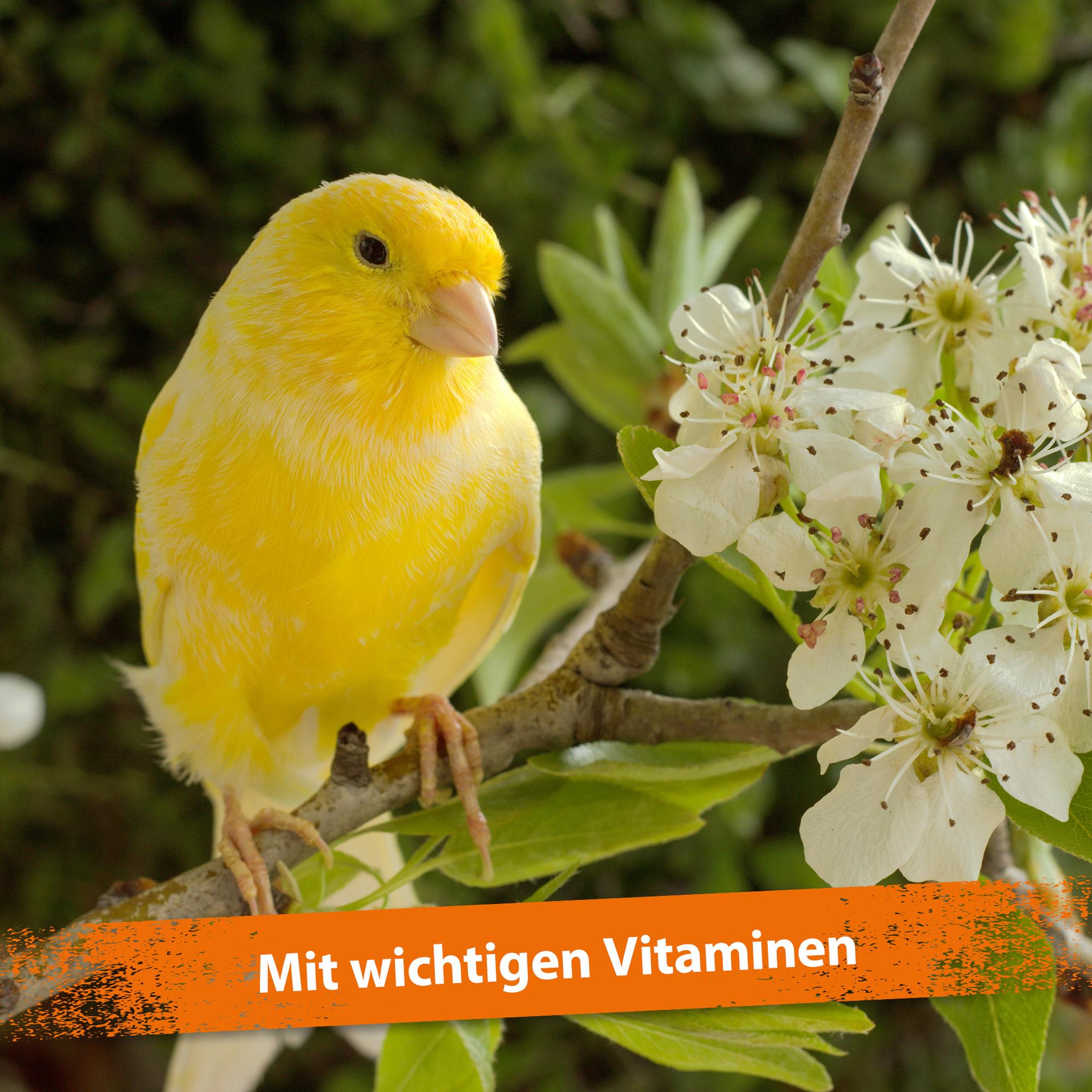 Mispusan - Mineralfuttermittel für Amphibien, Reptilien & Vögel - 200 g