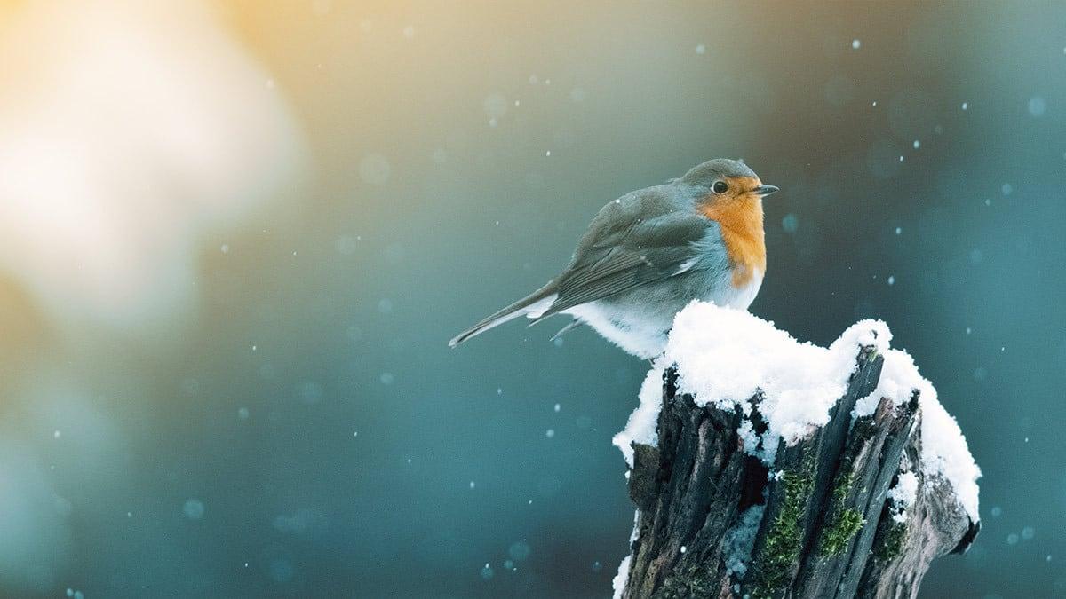 Hilfe für unsere Gartentiere im Winter