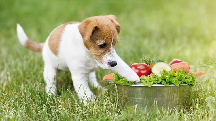 Vitamine - So wichtig sind sie für deinen Hund!