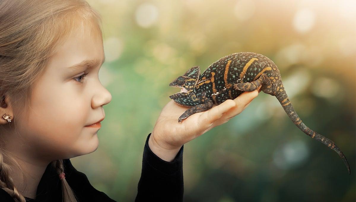 Vitamin- & Mineralstoffmangel bei Reptilien, Amphibien & Vögeln vorbeugen