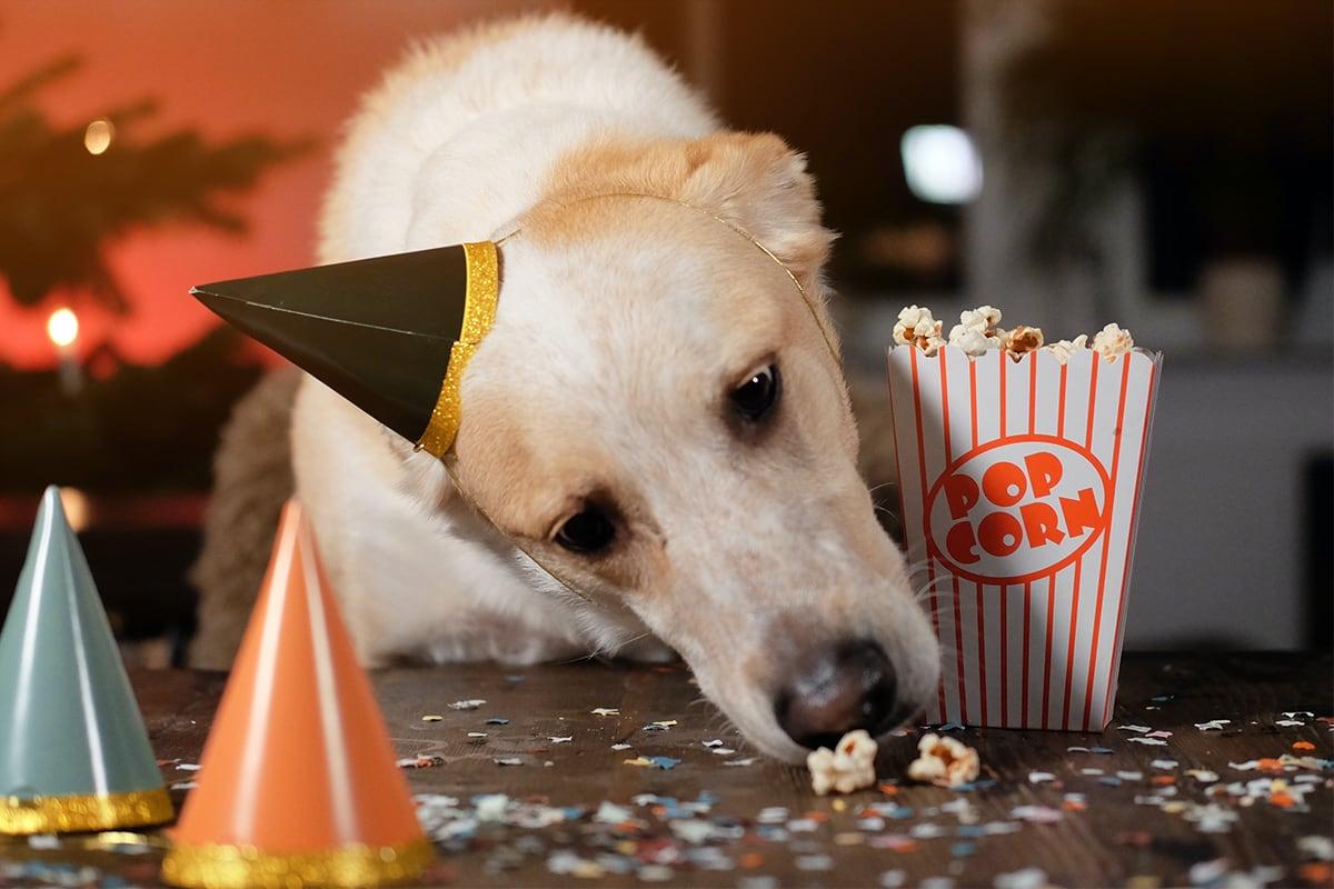 Hunde-Popcorn selbst gemacht