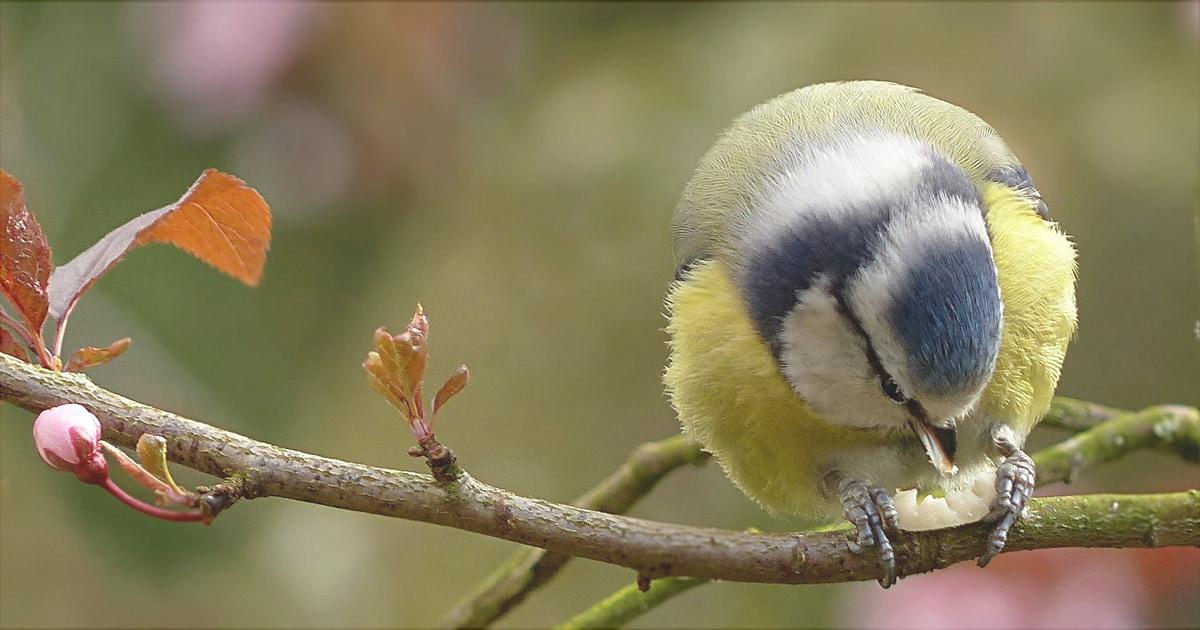 Vögel füttern – im Frühjahr wichtiger denn je