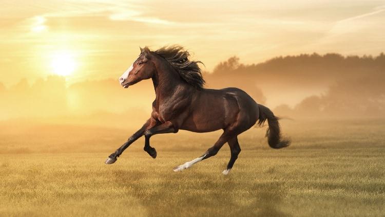 Biotin & Zink - die Schönheitsnährstoffe für dein Pferd