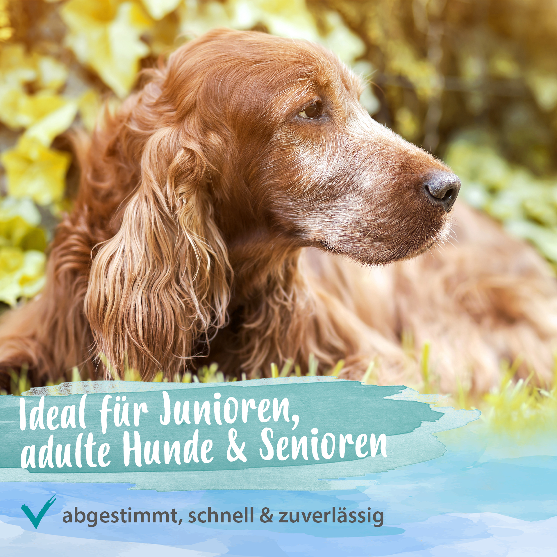 Artisan forte - Gelenktabletten für Hunde - 180 g