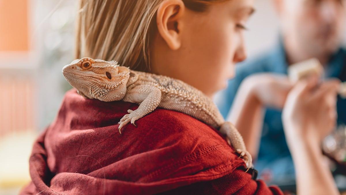 Mineralstoffmängel bei Reptilien erfolgreich verhindern