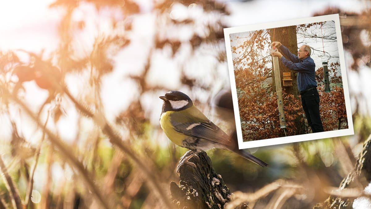 Ist eine ganzjährige Fütterung unserer Wildvögel sinnvoll?