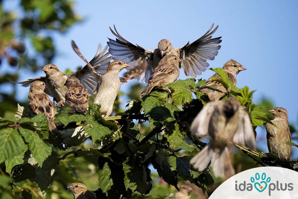 Ganzjahresfütterung von Garten- und Wildvögeln