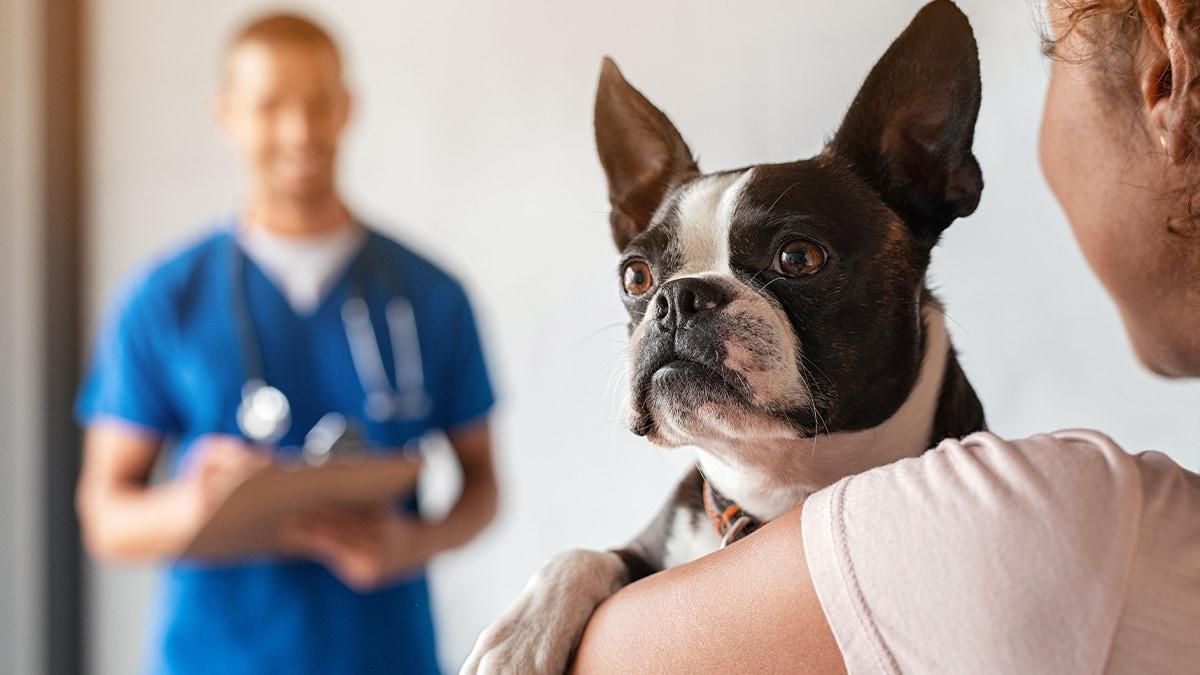 Mit Medical Training gelassen zum Tierarzt