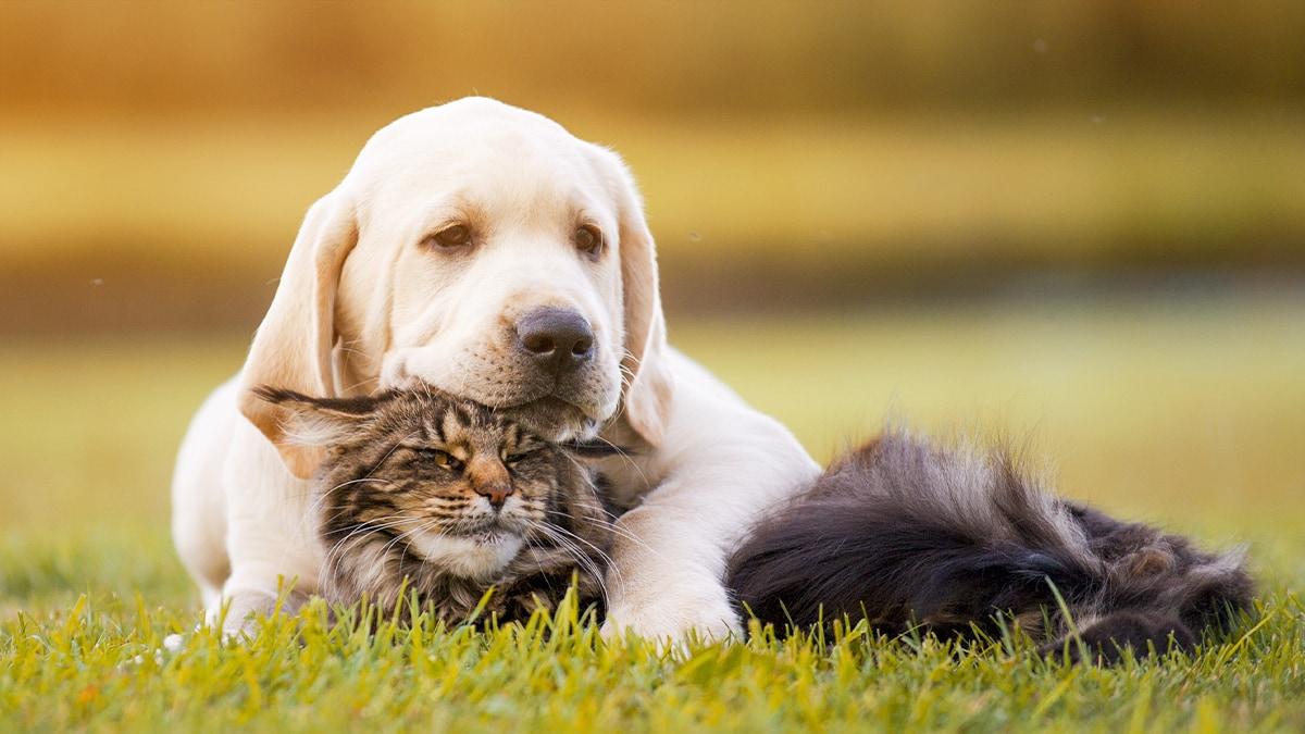 Hunde und Katzen aneinander gewöhnen - so klappt es!