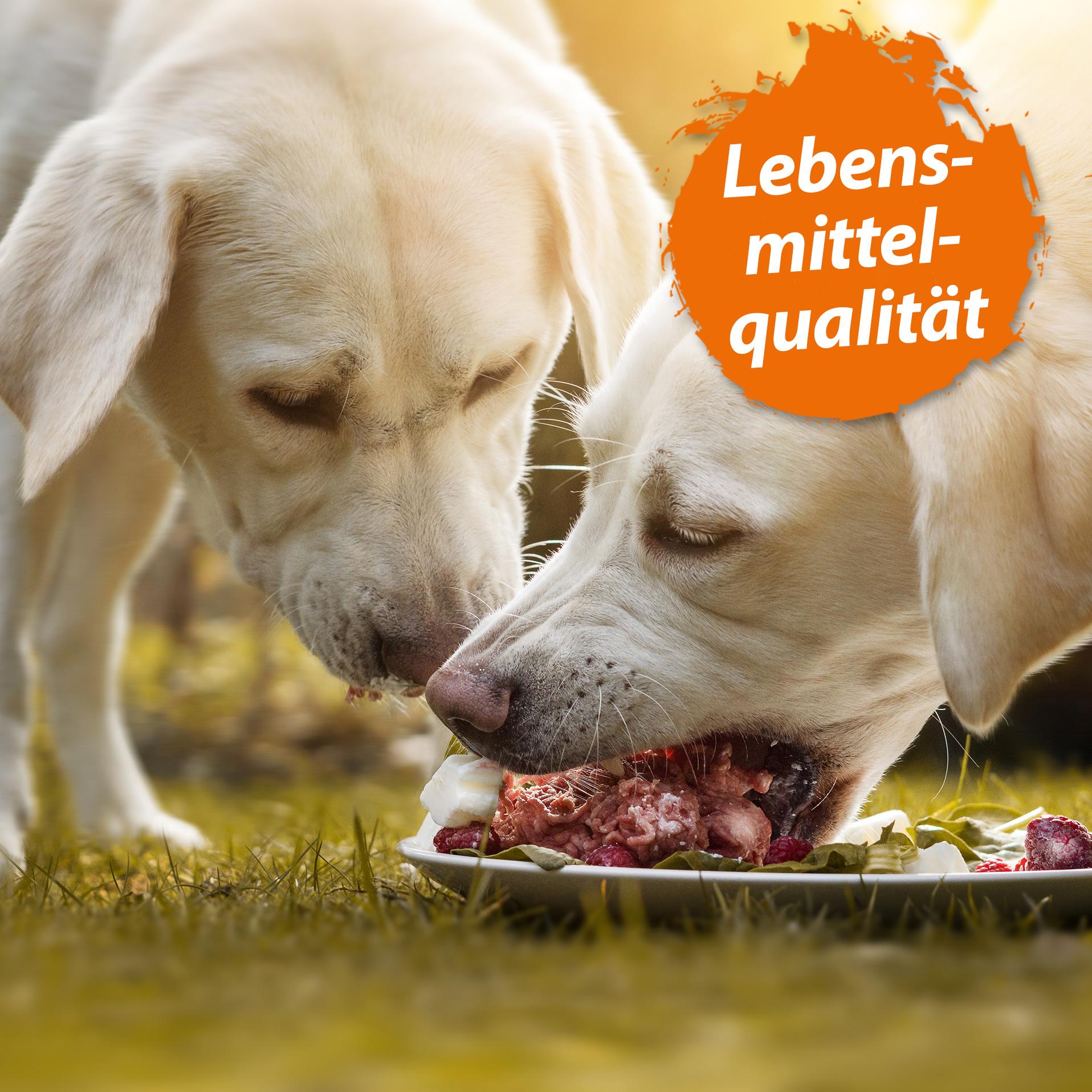 MSM Pulver - Organischer Schwefel in Lebensmittelqualität - 150 g