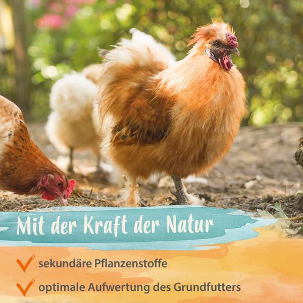 Hühner Edel-Kräuter – Mischung aus 19 wertvollen Kräutern - 500 g