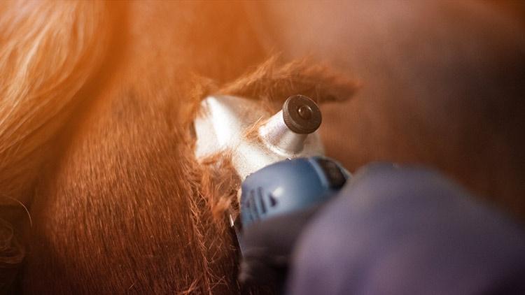 Sollte ich mein Pferd scheren?