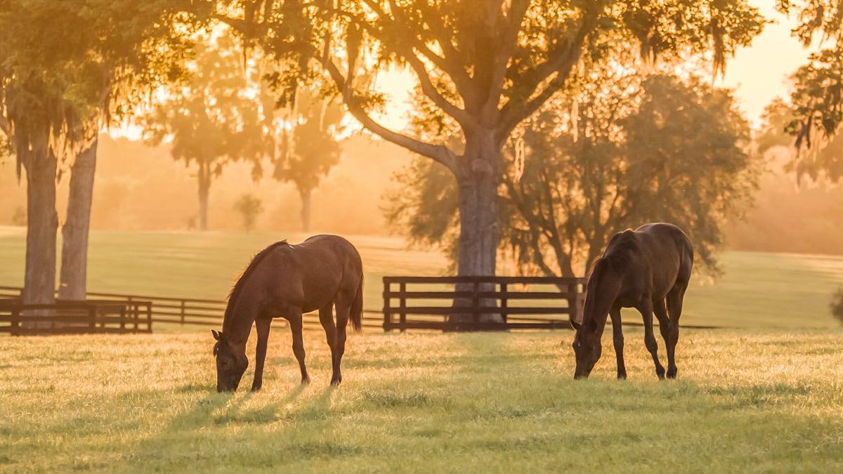5 Tipps, damit das Anweiden deines Pferdes richtig klappt